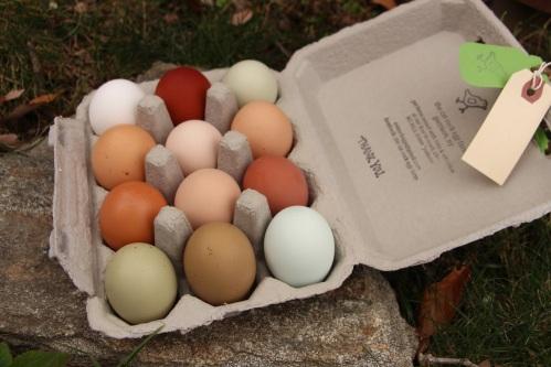 Minimized The Cat Rock Egg Farm